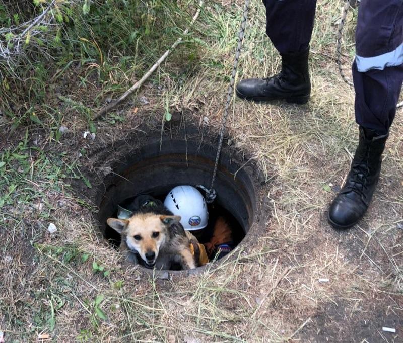 В Омске волонтеры спасли собаку, провалившуюся в колодец #Новости #Общество #Омск