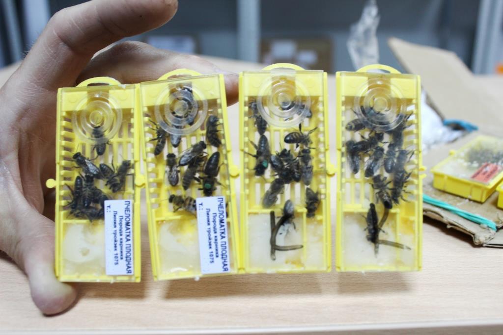 Пчеловод из Омской области отсудил почти полмиллиона за погубленную пасеку #Омск #Общество #Сегодня