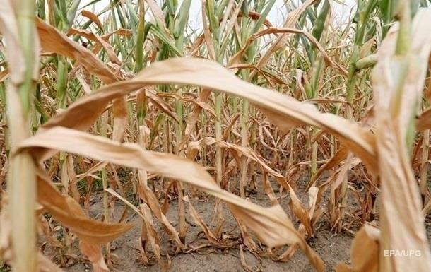 В ООН предупредили об опасности засухи