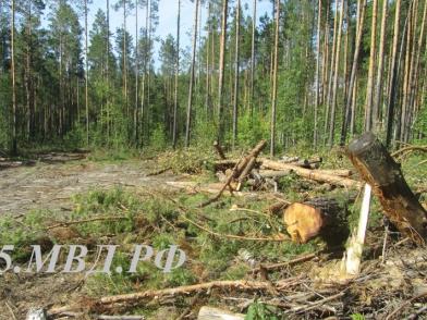 Банда «черных лесорубов» заплатит 16 млн за омский лес #Новости #Общество #Омск