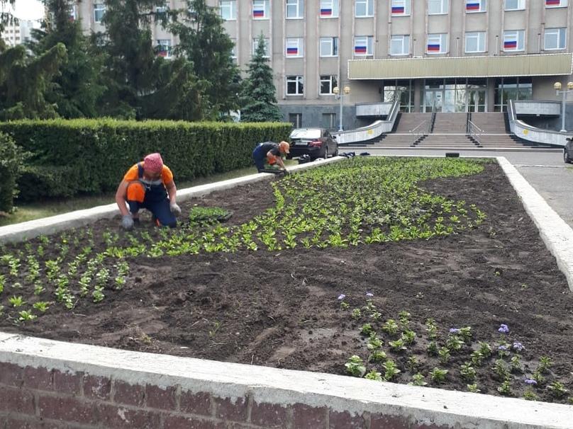 Омичи воруют цветы с городских клумб #Омск #Общество #Сегодня