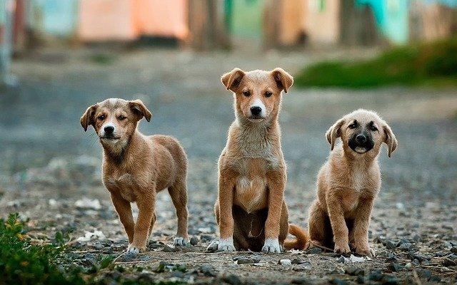 Омич отдал все деньги преступникам, чтобы вернуть собаку #Омск #Общество #Сегодня