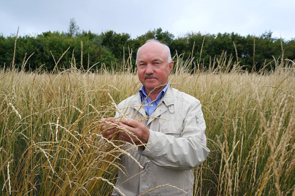 В Омске создают новые сорта пшеницы, способные превратить пищу в лекарство