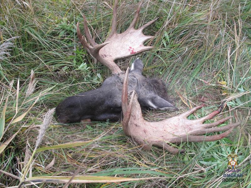 Поохотился на миллион рублей: омский браконьер посчитал свой штраф завышенным #Омск #Общество #Сегодня