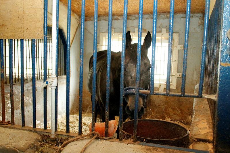 В Омской области задержали 27 лошадей со странными документами #Омск #Общество #Сегодня