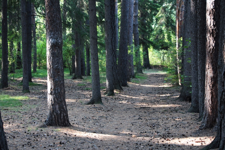 Омский лесовод рассказал, как не пропасть навсегда, заскочив на часок за грибами #Омск #Общество #Сегодня