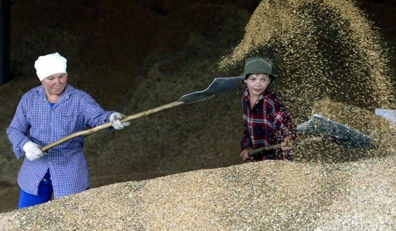 Из Омской области нелегально пытались вывезти более 200 тонн зерна #Новости #Общество #Омск