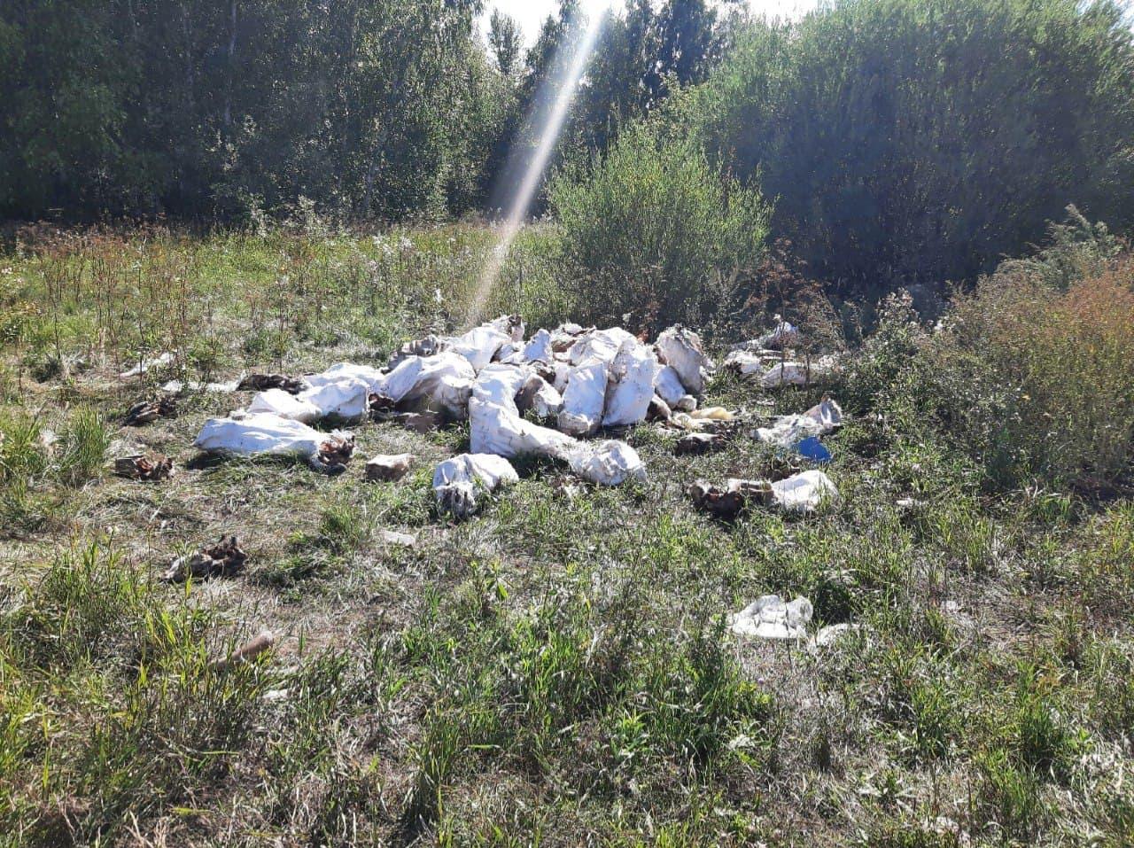 В Омске нашли две свалки с черепами #Новости #Общество #Омск