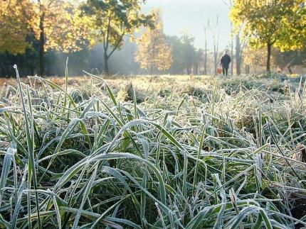 Уже к концу недели температура в Омске опустится ниже нуля #Новости #Общество #Омск