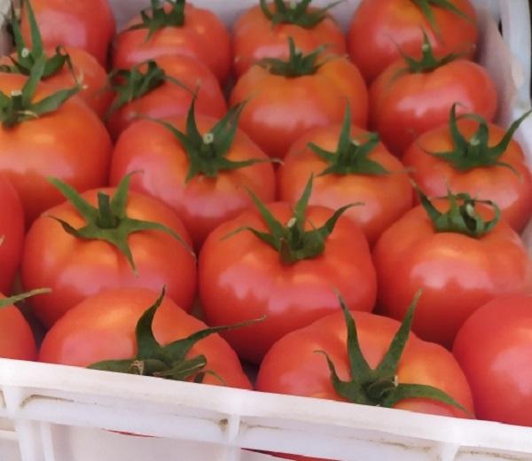 В Россию завезли опасные фрукты и томаты из Турции #Новости #Общество #Омск