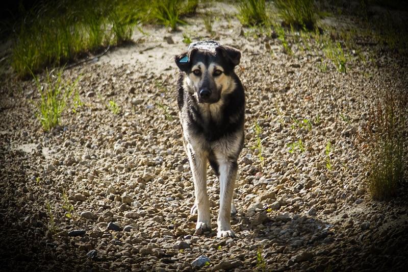 Вынесен приговор омичу, из мести расчленившему соседскую собаку #Омск #Общество #Сегодня