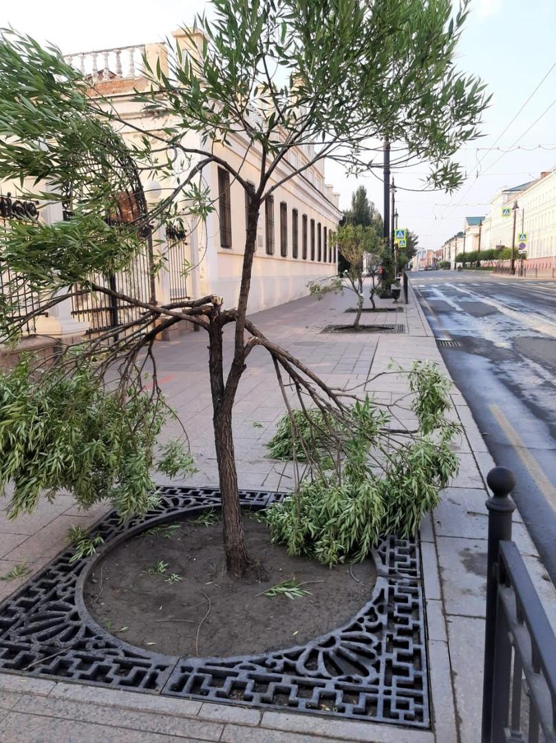 С омички, сломавшей ивы в центре города, взыскали 80 тысяч #Новости #Общество #Омск