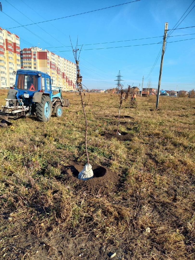 На омской окраине, похожей на степь, высадили десятки ясеней и яблонь #Новости #Общество #Омск
