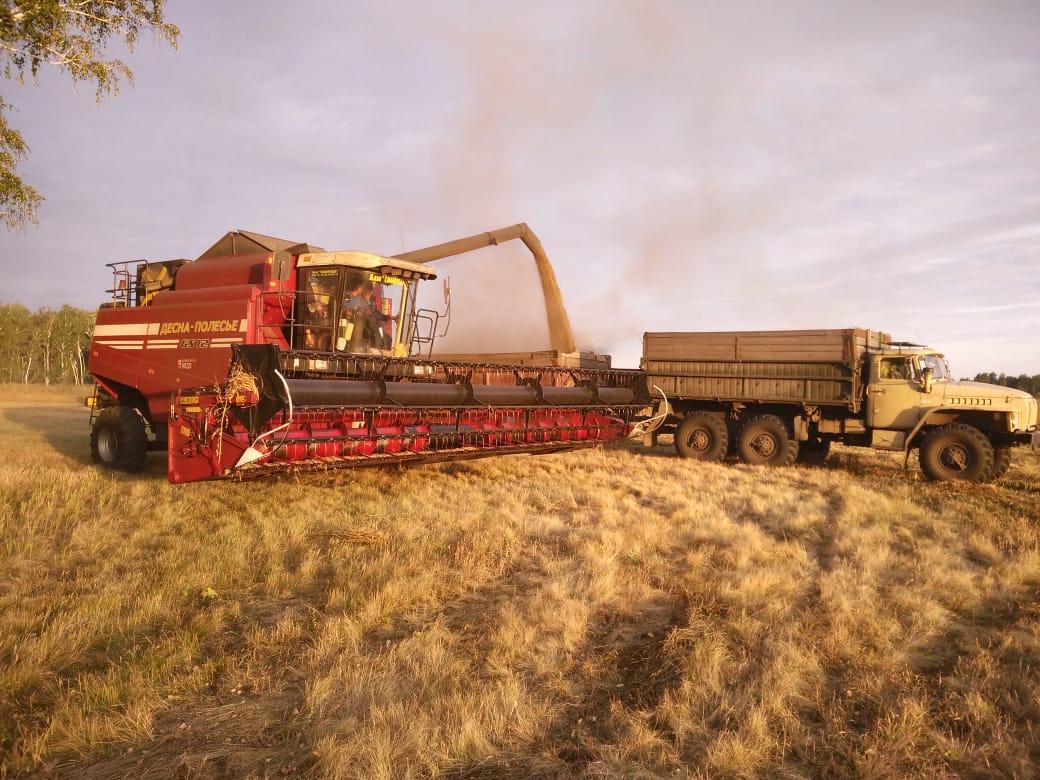 В Омской области все-таки собрали 3 млн тонн зерна