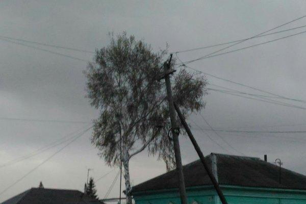 В Омской области целые сутки будет бушевать сильный ветер #Новости #Общество #Омск