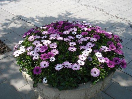 В клумбе с цветами на улице Омской были спрятаны 225 000 рублей.