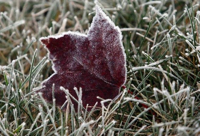 Синоптики предупреждают омичей о заморозках до -3 градусов