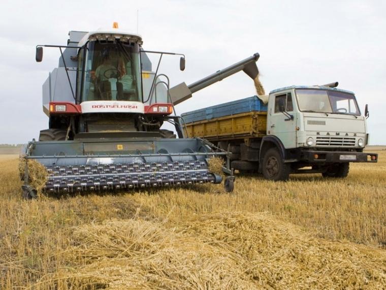 Средняя урожайность пшеницы в Омской области составляет 15,8 центнера с гектара