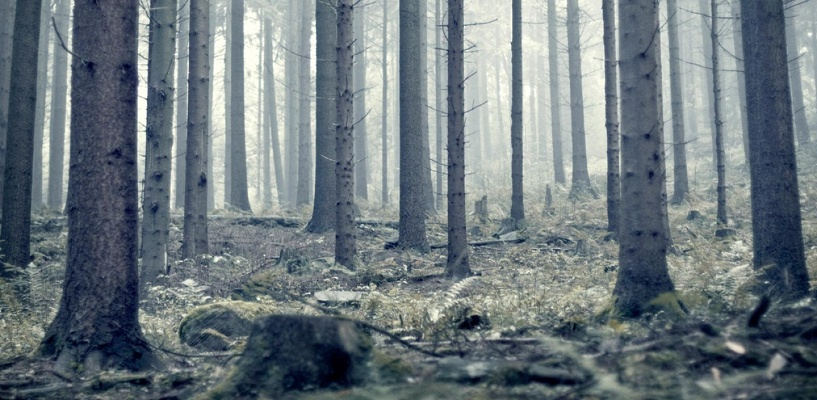 Из-за долга в 200 рублей мужчину вывезли в лес под Омском, убили и закопали