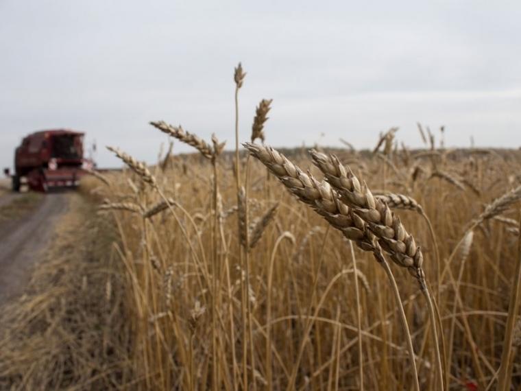 В Омской области намолотили 3,4 млн тонн зерна