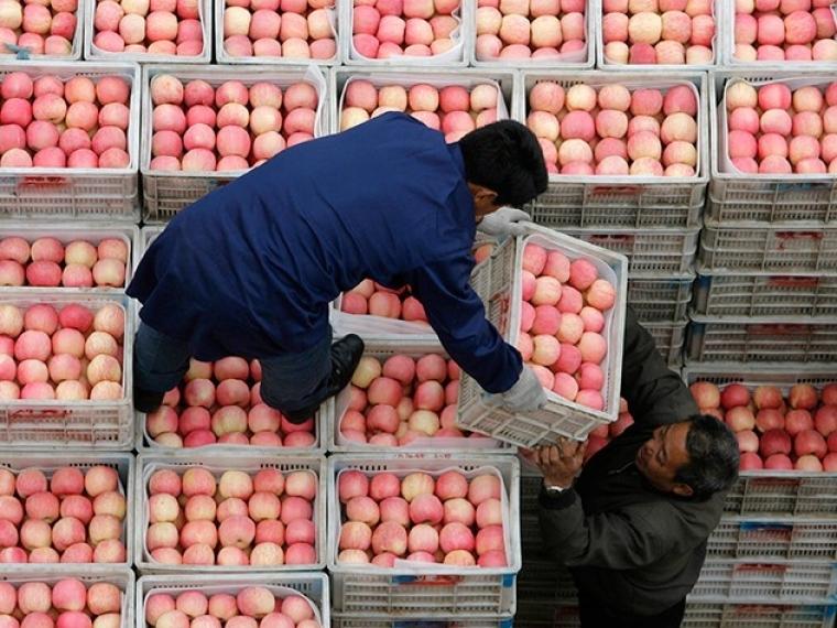 Омские специалисты Россельхознадзора задержали на границе 8 тонн санкционных фруктов