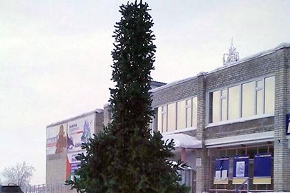 Жителей Ноябрьска удивила новогодняя ель фаллической формы
