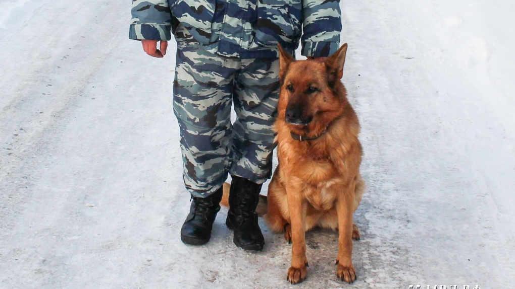 Полицейская овчарка нашла вора магнитол